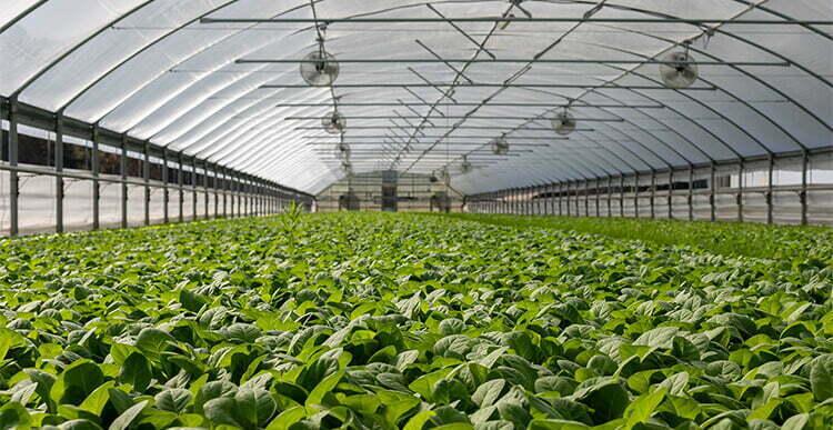 Field-of-Green-Plants